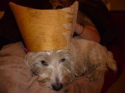 Birch bark container hat