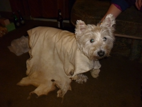 Buckskin doggy coat