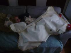 Buckskin as a blanket!